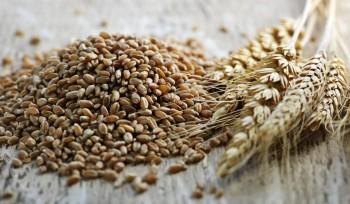 A low gluten alternative: Rye