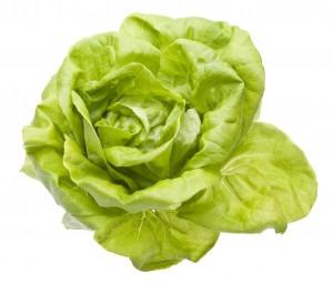 Ħass: Lettuce