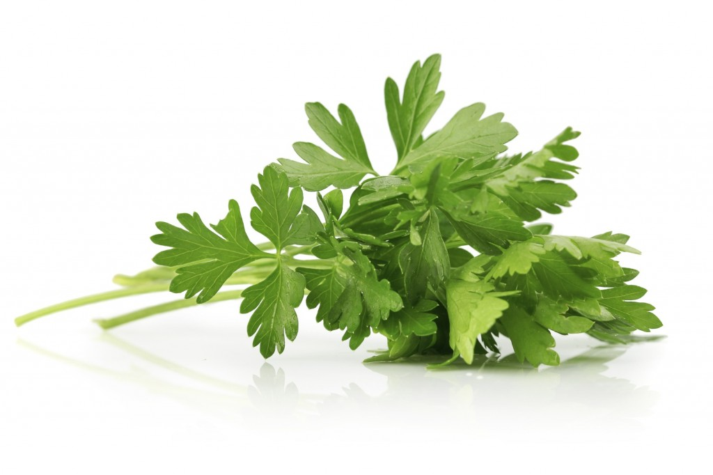 parsley- tursin